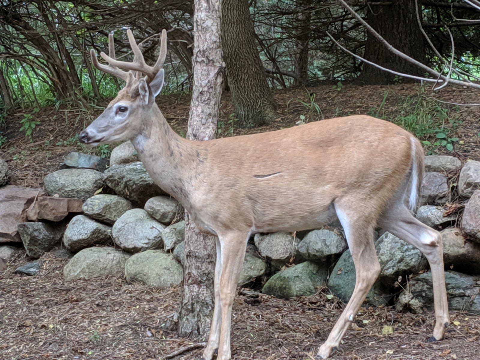 Riverview Dental deer